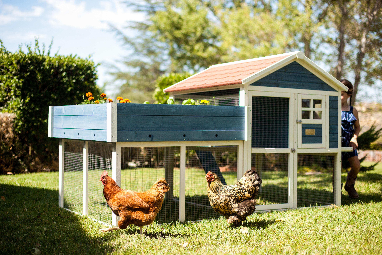 millennial pet advantek chicken coop