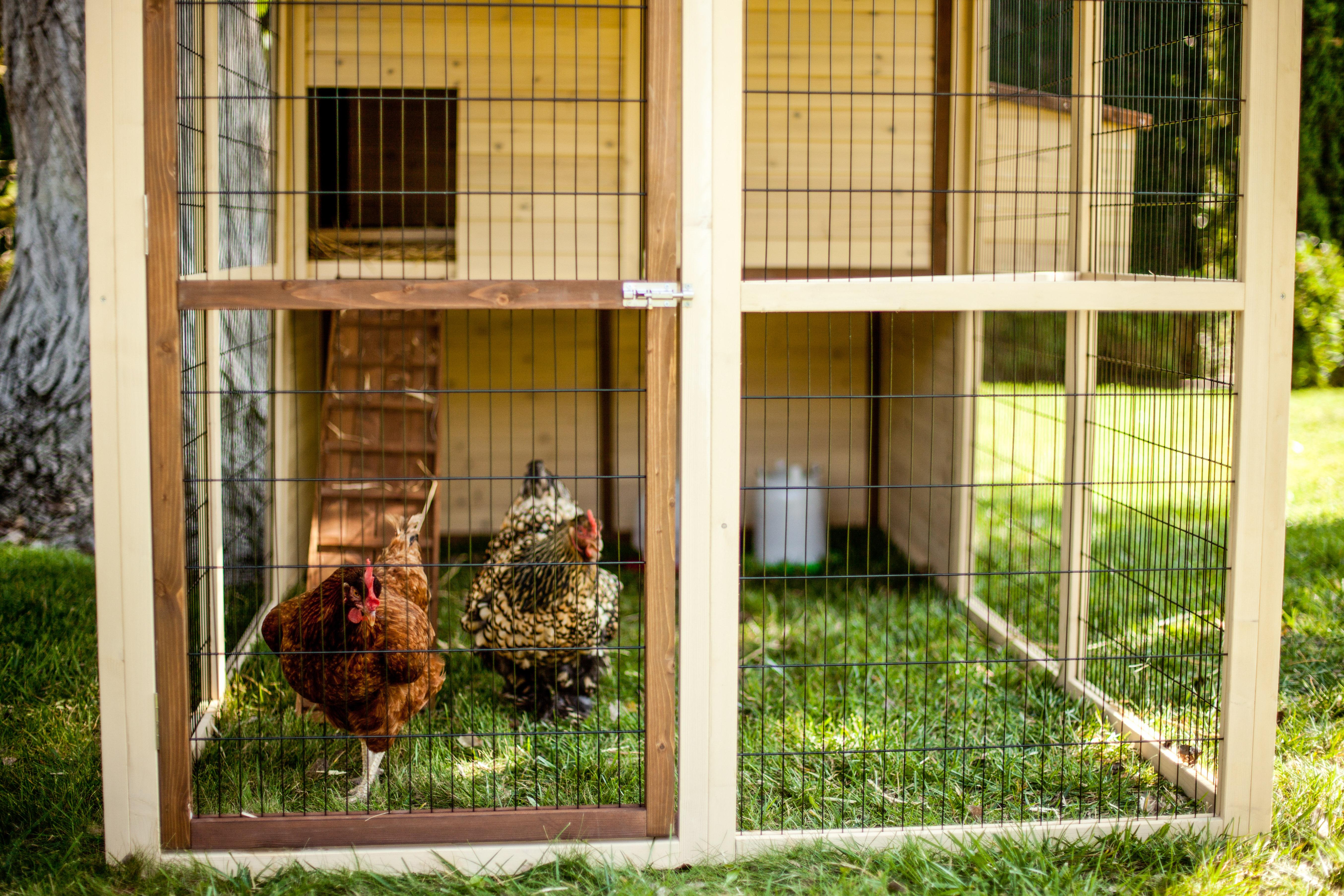 Advantek-Townhouse-Humane-Chicken-Coop-.jpg