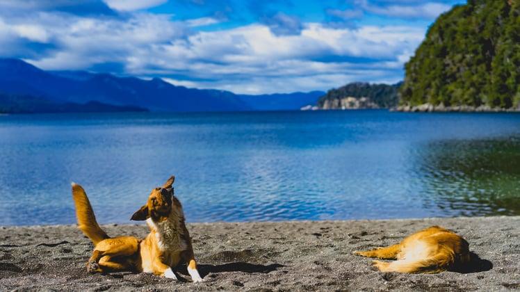 dog-lake-summer-sales.jpg