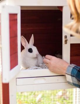 high quality rabbit food small animal food