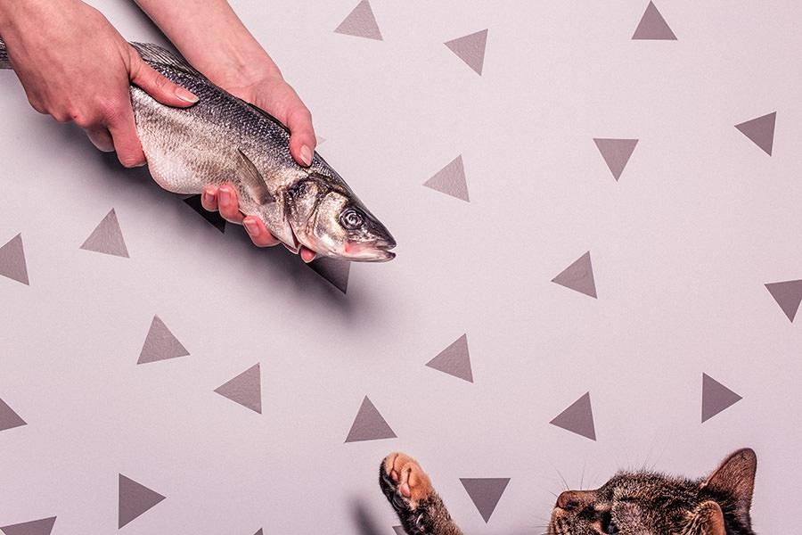 pet-food-benefits-pet-product-trends-2018