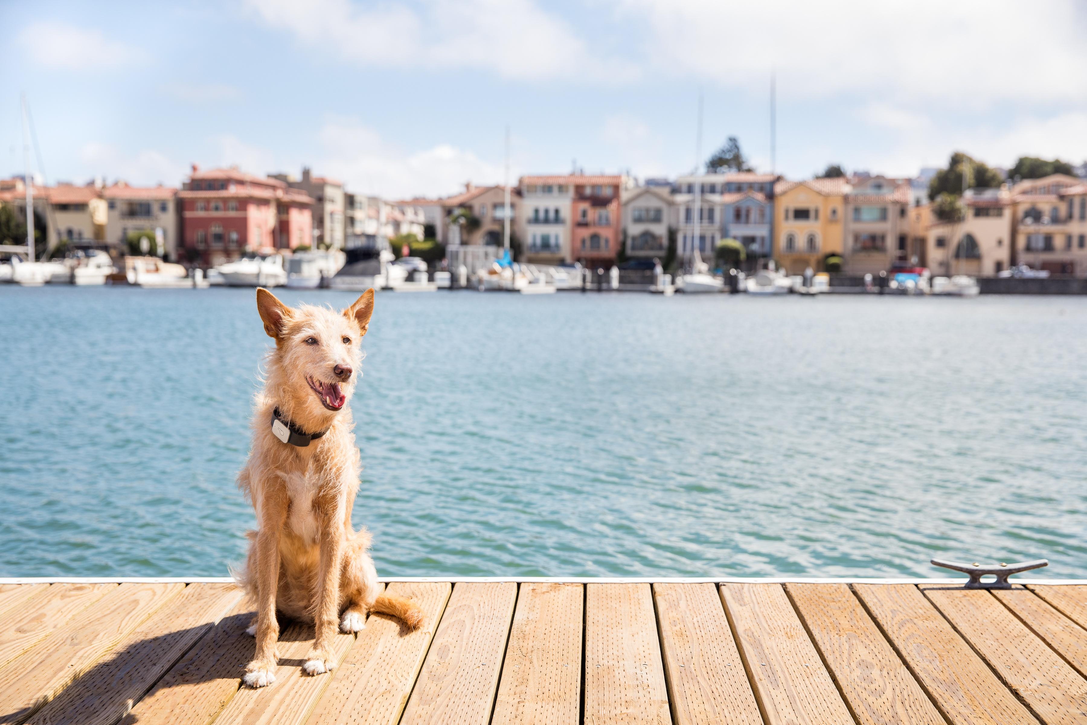 whistle-dog-dock.jpg